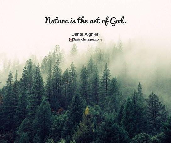 Kecerdasan naturalis